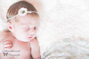Newbornshoot Breda