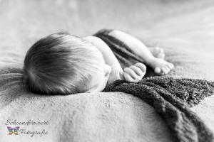 Newbornshoot Roosendaal